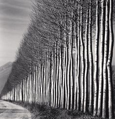 Michael Kenna's photograph of a line of trees (via... — the track east #LandscapeArquitecture