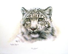 "Charles Frace"" - ""Snow Leopard"""