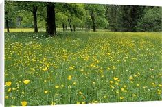 Canvas Prints of Meadow in spring time from Robert Harding $64.95