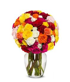 Flowers - 50 Blooms of Rainbow Roses... for only $29.99