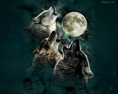 #1407826, HD Widescreen Wallpapers - wolf backround