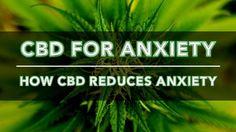 CBD for Anxiety: How Cannabidiol Reduces Anxiety