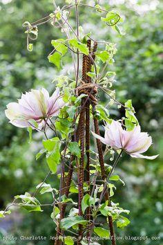 Garden Flow: In Bloom