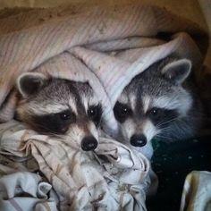 #bedtime #cuddlebuddies