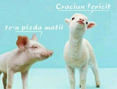 Greeks eat lamb on Easter. The pig said Happy Easter. the lamb said go f*** yourself. Image St Valentin, Videos Funny, Funny Memes, Funny Cute, Hilarious, Dont Trust People, Greek Easter, Easter Lamb, Easter Wishes