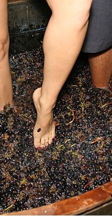 stomping grapes   Grape Stomping     she wants to do this