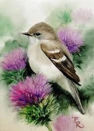 #birdillustration
