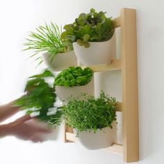GardenWall by Design TUNED / Weecos