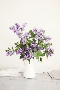 lilac//