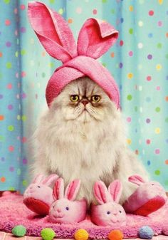 O my word...scary turban bunny kitty!! In pink bunny slippers....I am afraid.