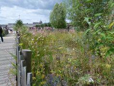 Ile de Nante - Gestion différenciée des espaces verts - plantation d'une prairie fleurie rustique sur un mélange terre/pierre (20/60) - Protection périphérique assurée par des ganivelles