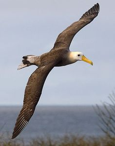 Albatross - albatrosses and petrels, regularly grab the baited hooks on long lines. Many albatrosses are dragged to their deaths - more than 100,000 each year!