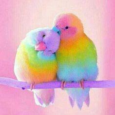 Cute Little Colorful Bird Diamond Painting Little Birds, Love Birds, Beautiful Birds, Baby Animals, Cute Animals, Whatsapp Wallpaper, Whatsapp Dp Images, Funny Birds, Budgies