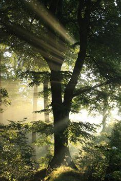 Morgendämmerung im Wald