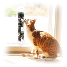 """$12 K&H Manufacturing EZ Mount Self-Grooming Brush Black 3.5"""" x 17"""".  Uh, does this look like a dryer brush to anyone? I could make this! Mounts to any surface, bendable so can make your own shape, cats love to self-groom"""