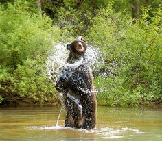 River Safari in blue river October 2nd. Didn't see this but dod see a black bear exploring the trees.