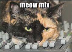 Catpods<3