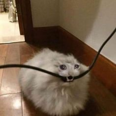 Kittypop time - YouTube Cute Cats, Funny Cats, Funny Animals, Cute Animals, Crying Meme, Cat Crying, Sad Cat Meme, Cat Memes, Cat Icon