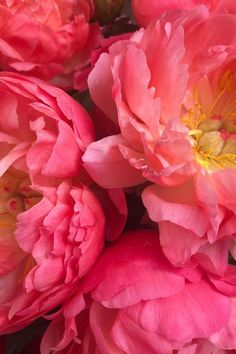 Full open pink peonies in spring | Darcy Miller #petal #peony #fuschia #springtime #flower #inspo #inspiration #centerpiece #bouquet Summer Flowers, Diy Flowers, Wedding Flowers, Pink Peonies, Peony, Wedding Anniversary, Anniversary Gifts, Spring Projects, Spring Party