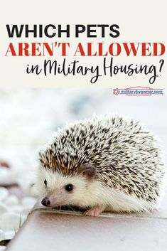 Which Pets Aren't Allowed in Military Housing? #military #militaryhousing #pets
