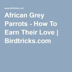 African Grey Parrots - How To Earn Their Love | Birdtricks.com