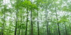 Trees in a Forest, Hamburg, New York State, USA Landscapes Photographic Print - 61 x 30 cm