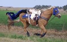 trick riding saddle - Google Search