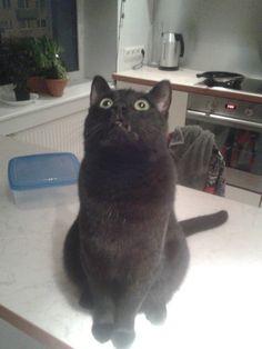 天井を見上げる猫01