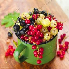 106 seeds/pack Red currant Fruit plant Pan-American Gooseberry seeds Lantern fruit seed,bonsai plant for home garden . 106 seeds/pack Red currant Fruit plant Pan-American Gooseberry seeds Lantern fruit seed,bonsai plant for home garden . Fruit And Veg, Fruits And Vegetables, Fresh Fruit, Fruit A Pepin, Gooseberry Recipes, Red Currant Recipe, Currant Berry, Vegetable Gardening, Snuggles