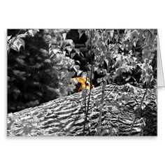 50%OFF Cards Use Code: 5GIFTSJUST4U #Tiger #WildLife #WildLifePhotography #Photography #GreetingCard Peek-a-boo