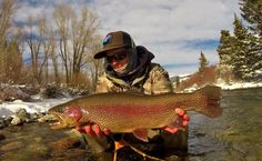 Nice rainbow trout on the fly.