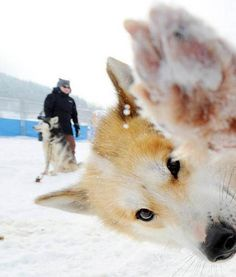 14 of the Best Photobombing Dogs In The History of the Internet (ever!)