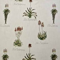 Aloe Africana from Valley of the Vines, a new collection by Hertex Fabrics.