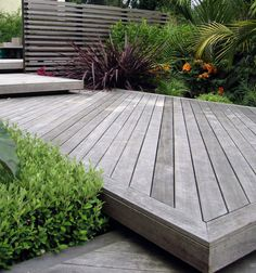 decking in a sub-tropical styled garden