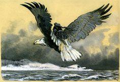 Canis Albus — Kalevala illustrations by Nicolai Kochergin Detailed Paintings, New Fantasy, Epic Art, Fantasy Creatures, Dark Art, Bald Eagle, Fairy Tales, Art Photography, Illustration Art