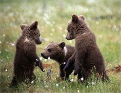 Konsta Punkka: Kolme karhunpentua