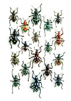 This is called Walking Weevils and is by Christopher Marley. I like the geometric patterns on these beetles. Christopher Marley, Bug Art, Beautiful Bugs, Insect Art, Belle Photo, Beautiful Creatures, Butterfly, Artwork, Beetles