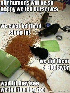 Our humans will be so happy we fed ourselves. We even let them sleep in. We did them a Big favor. Wait til they see we fed the dog too.