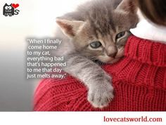 """""""When I finally come home to my cat, everything bad that's happened to me that day just melts away."""" #cat #humor #cats #funny #lolcats #humour #meme #cute #quotes =^..^= www.zazzle.com/kittyprettygifts"""