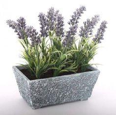 Plantas que atraen buenas energías para el hogar: plantas para la protección