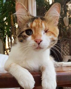 (📷 @twinkleandfriends   ig) #petclubsa #nature #photography #catcontent #katzen #katzenliebe #catperson #catsoftheworld #cutekitten #instakatze #katt #cute #pet #petsofinstagram #catsofinstagram #catstagram #catoftheday #instacat #catlovers #instagood #catslove #catlover #caturday #thedailykitten #catlovers #catsofinsta #animals #adoptdontshop #worldofcutepets #cats 📍 Larnaca, Cyprus Cyprus, Kittens Cutest, Cat Day, Cats Of Instagram, Pet Supplies, Hug, Cat Lovers, Nature Photography, Adoption
