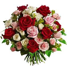 red white pink roses