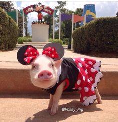 Priscilla takes Disneyland by storm