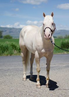 Buenos Partee Dude (Ready To Partee Dude x Buenos Sonny Lady)