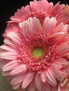 Gerbera Daisy: Not only do these gorgeous flowers remove benzene from the air, they're known to improve sleep by absorbing carbon dioxide and giving off more oxygen over night. Amazing Flowers, My Flower, Pretty In Pink, Pink Flowers, Beautiful Flowers, Perfect Pink, Margaritas Gerbera, Dame Nature, Pink Gerbera