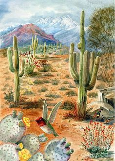 Treasures of the Desert Art Print by Marilyn Smith. All prints are professionally printed, packaged, and shipped within 3 - 4 business days. Choose from multiple sizes and hundreds of frame and mat options. Watercolor Landscape, Landscape Art, Landscape Paintings, Desert Landscape, Cactus Painting, Cactus Art, Cactus Plants, Fine Art Amerika, Southwestern Art