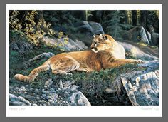 Forest Lair- Andrew Kiss  capandwinndevon.com