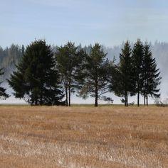 Pelto ja puut ©p3psim4x #pientalojapiha