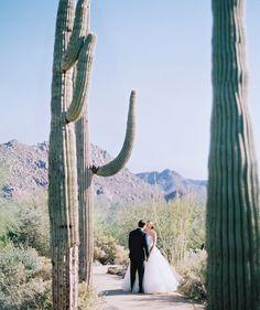 desert wedding with giant saguaro cactus - Melissa Jill Photography