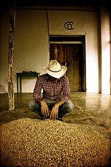 Coffee cowboy in Copan Ruinas, #Honduras